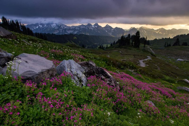 Tatoosh Lighting