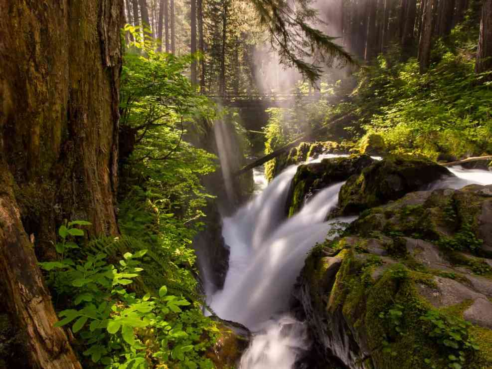 The Lure of Sol Duc Falls