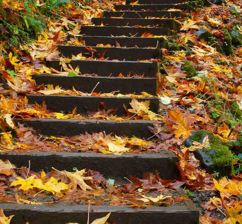 Stairs and Leaves