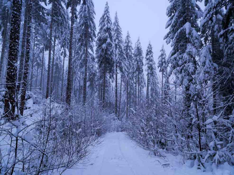 The Road to Valsetz