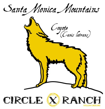 Circle-X-Ranch-Coyote