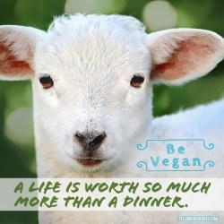 life-worth-more-than-dinner