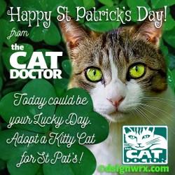 st-patricks-cat-doctor
