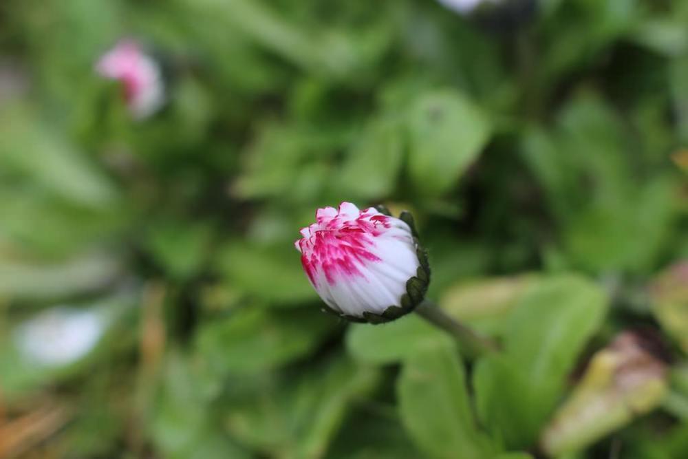 photo Macro de fleur avec extension tube