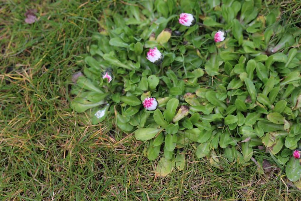 photo Macro de fleur sans extension tube