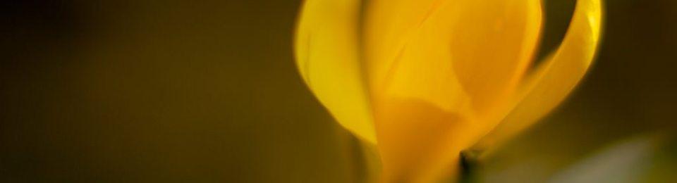 Faire de la macro photographie au 50mm avec un tube allonge