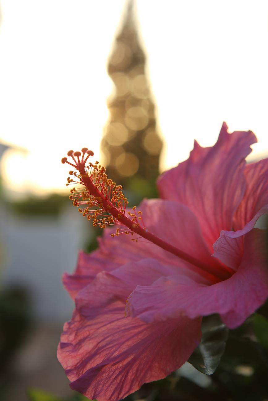 Fleur en Andalousie
