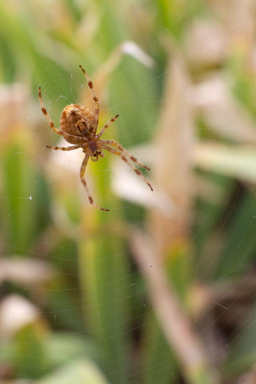 #03 L'araignée