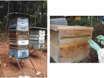 Criação de abelhas é alternativa de renda na Bahia