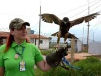 Sobre aves e aeronaves