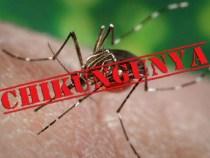 Vírus Chikungunya desencadeia atrite crônica após 3 anos