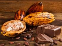 Ilhéus sedia Festival Internacional de Chocolate