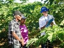 Agricultores podem renegociar dividas da irrigação