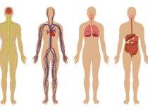 Como doar seu corpo para a ciência – Transmissão ao Vivo