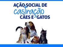 Castração de cães e gatos acontece em Conquista
