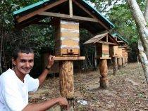 Curso gratuito da Embrapa ensina como criar abelhas sem ferrão em casa