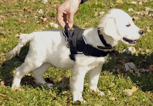 Siberian Husky Tough Sled Pulling Pull Dog Harness New