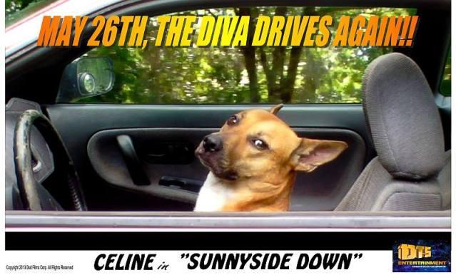 "Lobby Card for the DTS Entertainment Comedy Film, ""Sunnyside Down"""