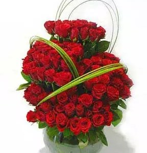101 red roses in red color
