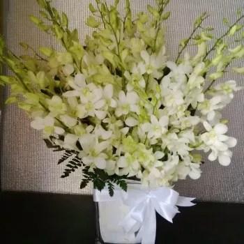 20 white orchids short vase