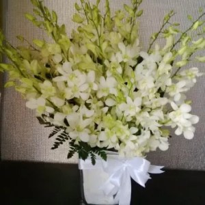 20 white orchids short vase