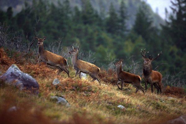 أبرز وجهات أيرلندا التي تحتفي بجمال الطبيعة الآخاذ في يوم التصوير الفوتوغرافي للطبيعة