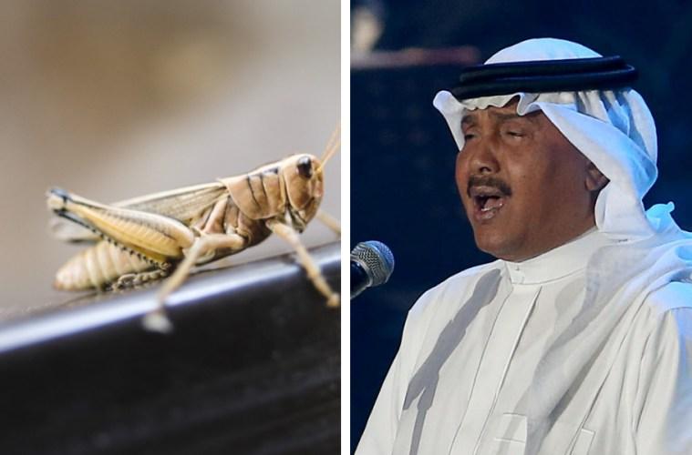 locust saudi live gig