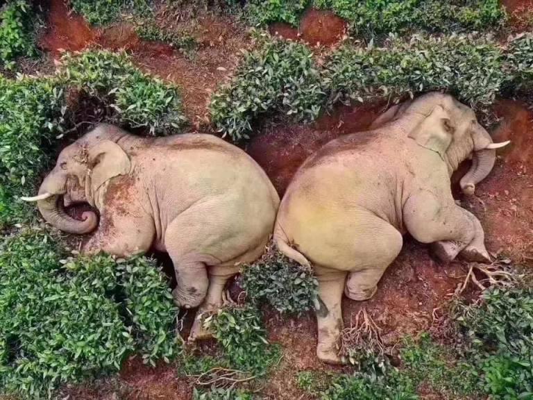 Merry elephants China