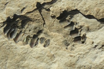 Ancient footprints dating back 120,000 years found in Saudi Arabia