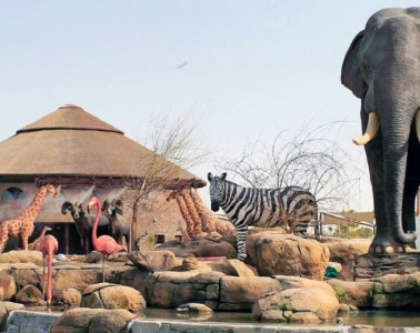 Dubai Safari Park to open in October after 2 years closed