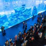 The largest aquarium in the world