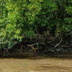 ras al khor mangrove