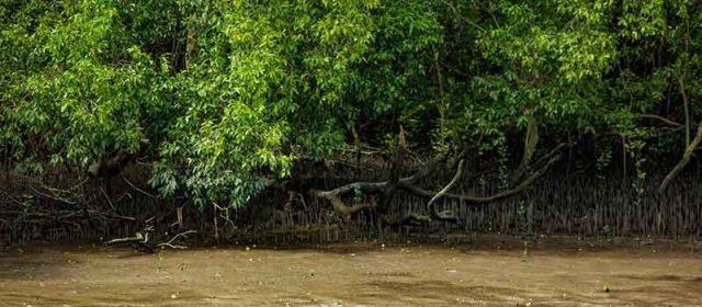 Ras Al Khor Mangrove Image