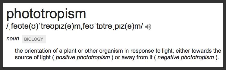 Definition of Phototropism via Google