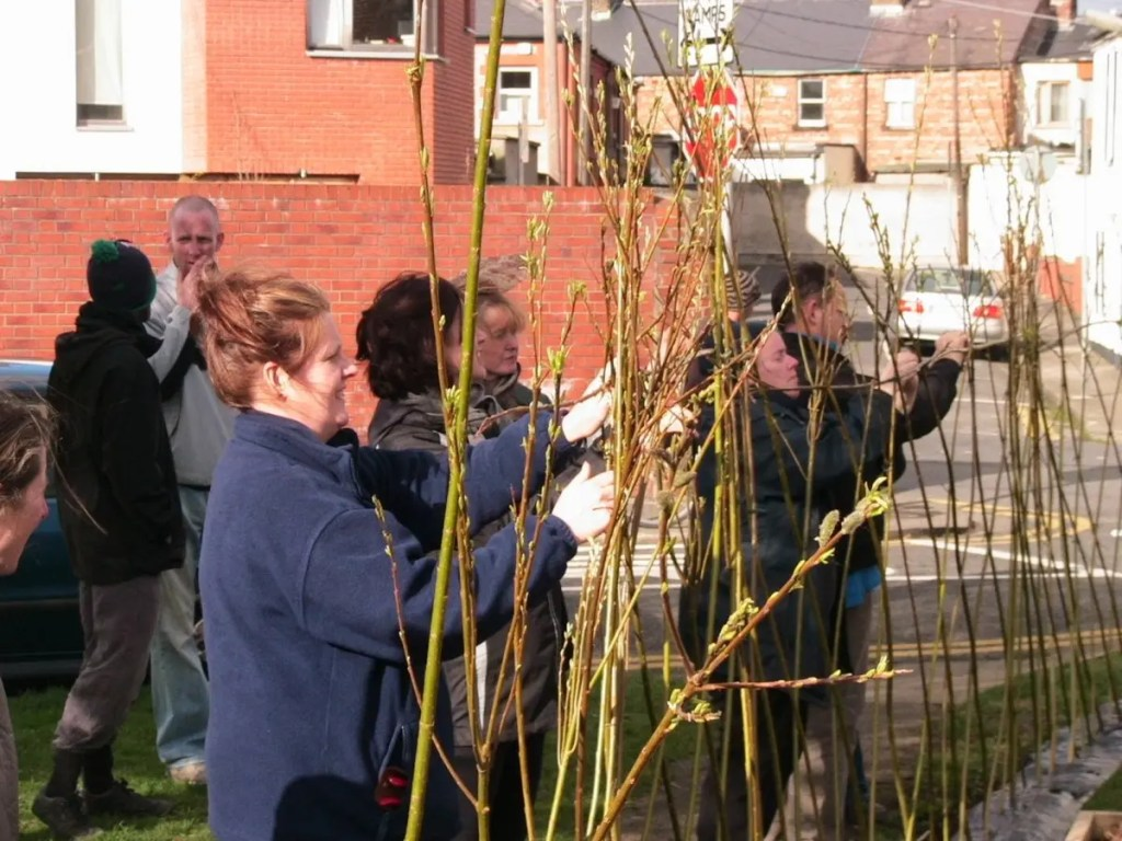 Making a willow fence