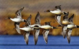 When is duck Season