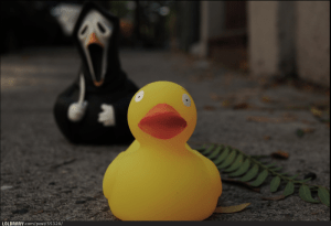 scared-duck-55328