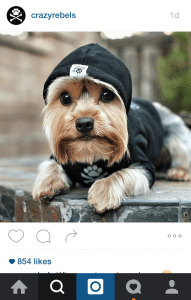 Dog Insta