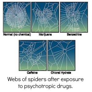 spiderwebs made under the influence of various drugs
