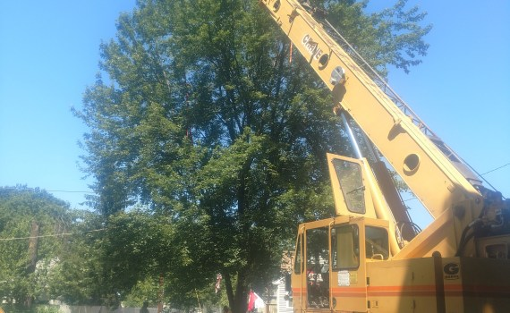 crane being used to remove a tree