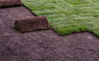 rolled up sod