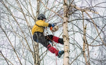 arborist removing tree in winter