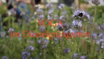 Yoga im düsselgrün
