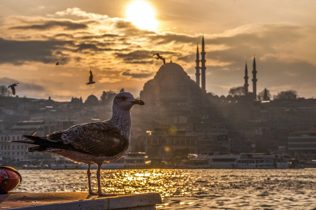 Istanbul-Turkey-seagul-at-sunset-1024x680 How to Fall in Love with Istanbul