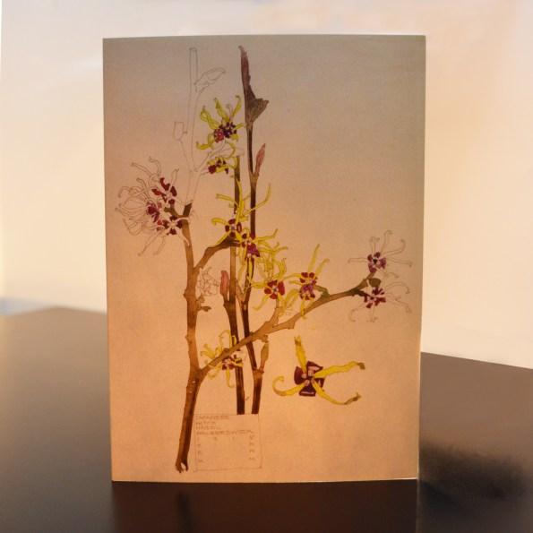 Charles Rennie Mackintosh - Japanese Witch Hazel