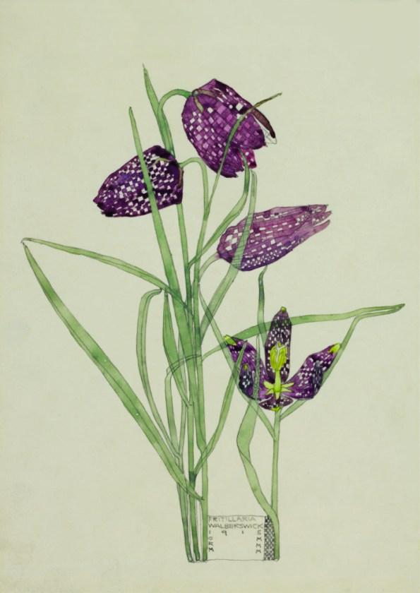 Mackintosh Fritillary Poster