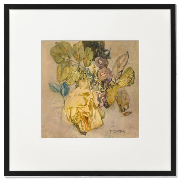 Framed print: Winter Rose