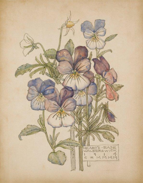 Heart's - Ease. Charles Rennie Mackintosh.