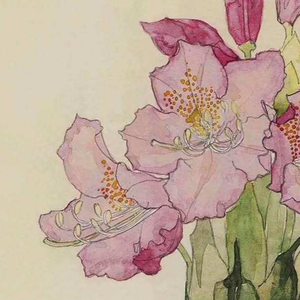 Detail. Rhododendron. Charles Rennie Mackintosh.