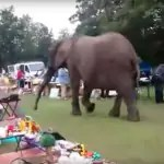 Olifant bezoekt rommelmarkt